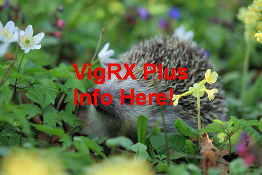 VigRX Plus What Is It