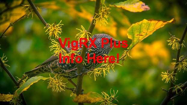 VigRX Plus Como Tomar