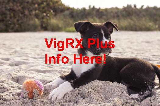 VigRX Plus Buy One Get One Free