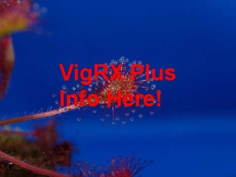 VigRX Plus Exercise Cd