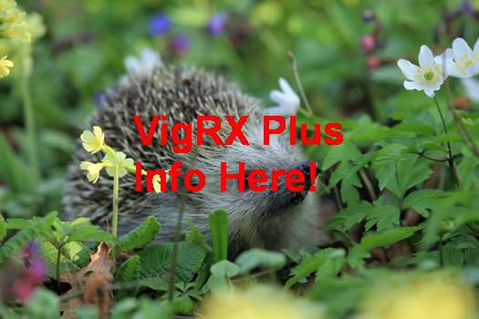 VigRX Plus Nedir