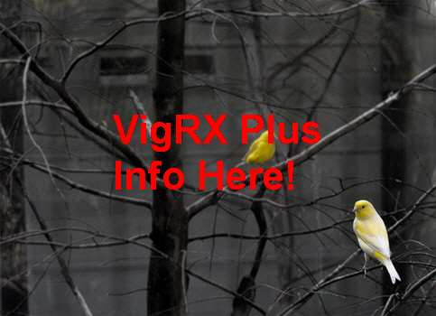 VigRX Plus Chile