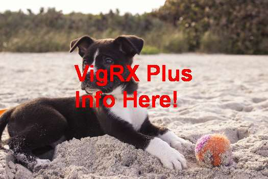 Cvs VigRX Plus