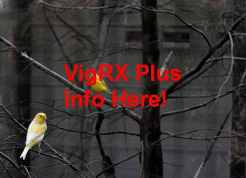VigRX Plus Come Si Usa